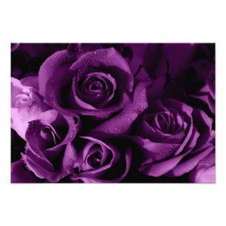 Beautiful Purple Roses Photo Print