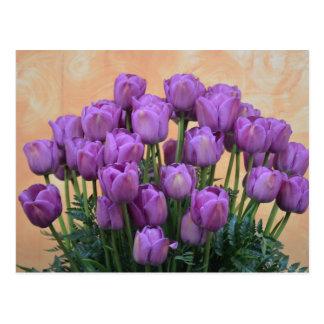 Beautiful purple spring tulips postcard