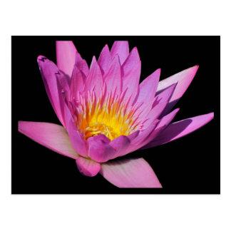 Beautiful purple water lily #200Nw  200 Postcard