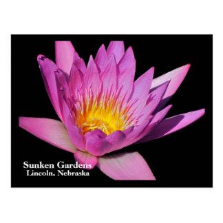 Beautiful purple water lily #800Nw  800 Postcard