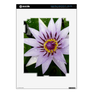 Beautiful Purple Water Lily Skins For iPad 3