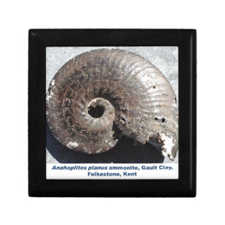 Beautiful pyrite ammonite fossil showing sutures gift boxes
