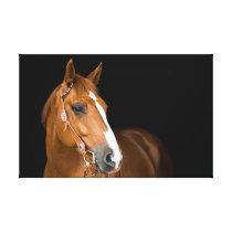 Beautiful Quarter Horse Photo Canvas