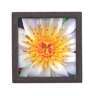 Beautiful Radiant  Water Lily Floating on a Lake Premium Gift Box