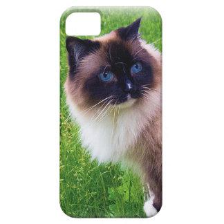Beautiful Ragdoll Cat iPhone SE/5/5s Case