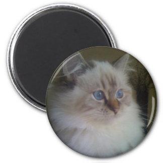 Beautiful Ragdoll Hymalayan Cat Gazing into Winter Refrigerator Magnet