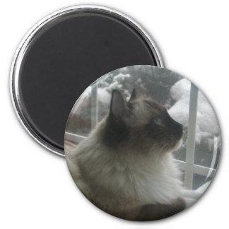 Beautiful Ragdoll Hymalayan Cat Gazing into Winter Magnets