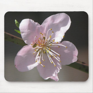 Beautiful  Raspberry Bloom Mouse Pad