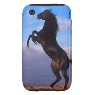 Beautiful rearing black horse with blue sky photo tough iPhone 3 cases