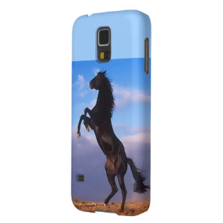 Beautiful rearing black horse with blue sky photo galaxy s5 case