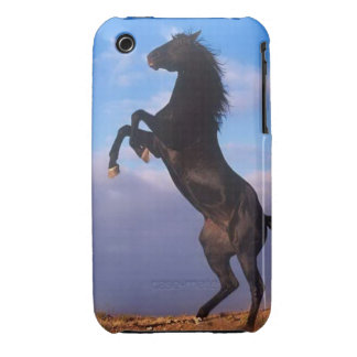 Beautiful rearing black horse with blue sky photo iPhone 3 cover