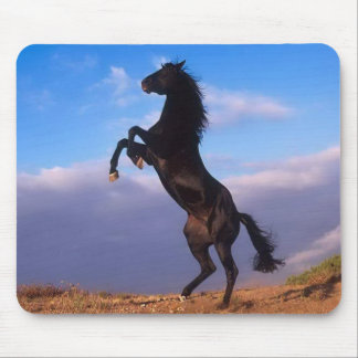 Beautiful rearing black horse with blue sky photo mouse pad