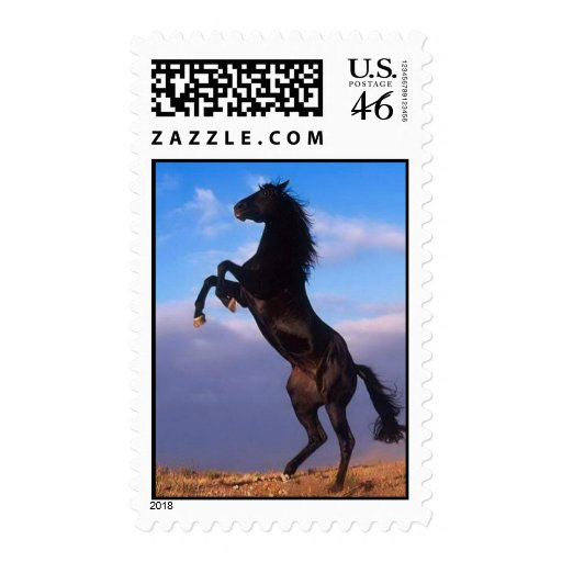 Beautiful rearing black horse with blue sky photo postage