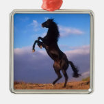 Beautiful rearing black horse with blue sky photo square metal christmas ornament