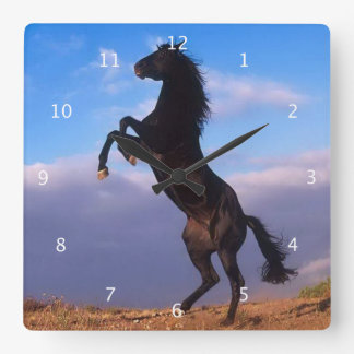 Beautiful rearing black horse with blue sky photo square wall clock