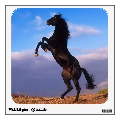 Beautiful rearing black horse with blue sky photo room graphics