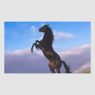 Beautiful rearing black horse with blue sky rectangular sticker