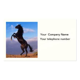 Beautiful rearing horse photo custom business card