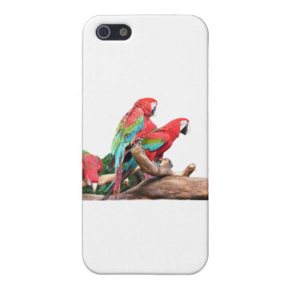 beautiful red and blue parrots case for iPhone 5