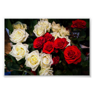 Beautiful red and white roses poster