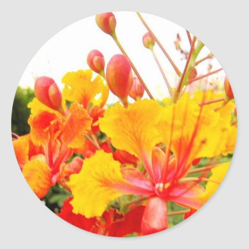 Beautiful Red and Yellow Flower Stickers