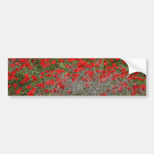 Beautiful Red Anemone Flowers In A Spring Field Bumper Sticker