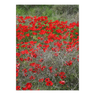Beautiful Red Anemone Flowers In A Spring Field Card