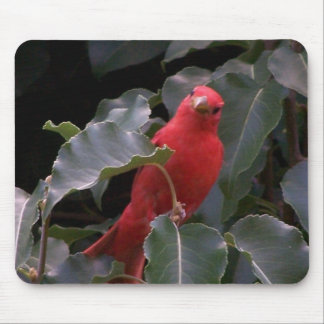 Beautiful Red Bird Mouse Pad