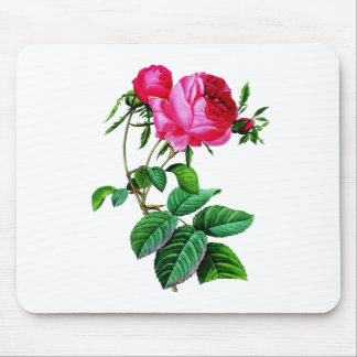 Beautiful Red Cabbage Roses by Redoute Mouse Pad