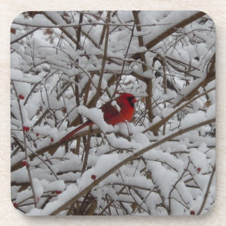 Beautiful Red Cardinal in a Snow Filled Tree Beverage Coaster