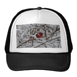 Beautiful Red Cardinal in a Snow Filled Tree Hat