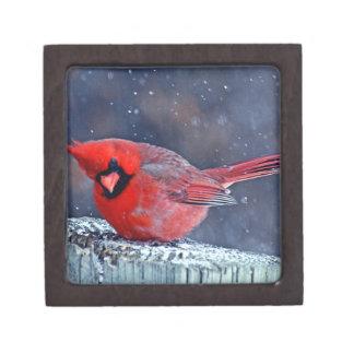 BEAUTIFUL RED CARDINAL PUFFY BIRD IN WINTER JEWELRY BOX