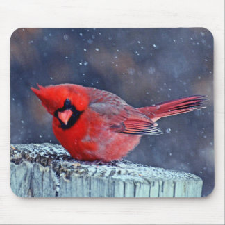 BEAUTIFUL RED CARDINAL PUFFY BIRD IN WINTER MOUSE PAD