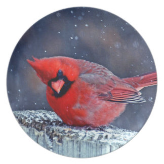 BEAUTIFUL RED CARDINAL PUFFY BIRD IN WINTER PLATE