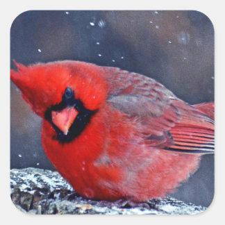 BEAUTIFUL RED CARDINAL PUFFY BIRD IN WINTER SQUARE STICKER