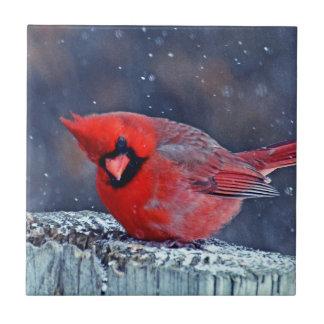 BEAUTIFUL RED CARDINAL PUFFY BIRD IN WINTER TILE