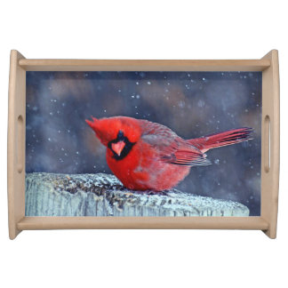 BEAUTIFUL RED CARDINAL PUFFY BIRD IN WINTER TRAY
