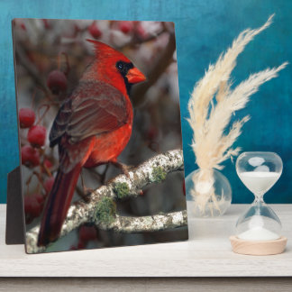 Beautiful Red Cardinal with winter berries Photo Plaques