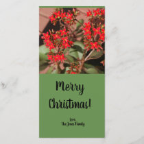 Beautiful Red flower plant Christmas Card
