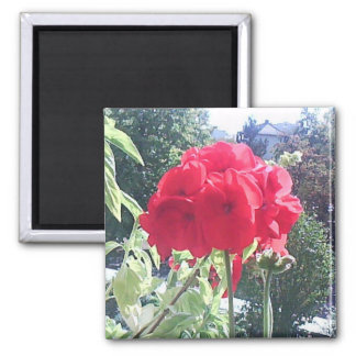 Beautiful Red Flowers Close-up Fridge Magnet Gift
