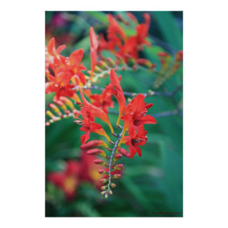 Beautiful Red Flowers Print # 6837