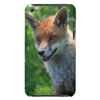 Beautiful red fox photo ipod touch 4G case