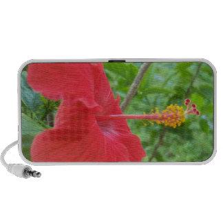 Beautiful Red Hibiscus Flower iPod Speakers