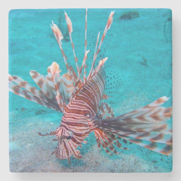 10pcs Unpainted Crank bait Fishing Lure Body 90MM 5.8G Blank lures 367