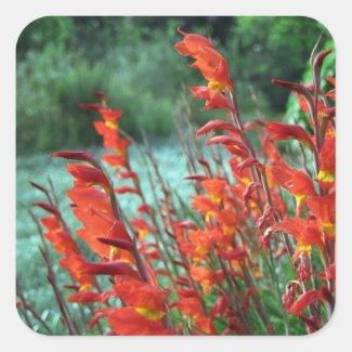 Beautiful Red Orange Gladiolus Flowers Square Sticker