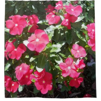 Red Periwinkle Flowers Up Close Picture Shower Curtain