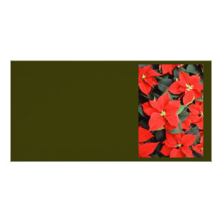 Beautiful Red Poinsettia Christmas Flowers Card