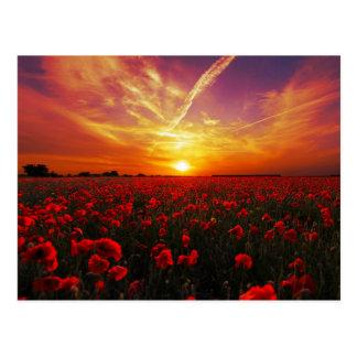 Beautiful red poppy flower field sunset postcard