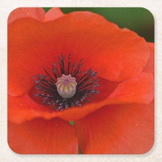 Beautiful Red Poppy Party Coaster