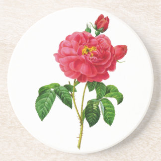 Beautiful Red Rose by Pierre Joseph Redoute Drink Coaster